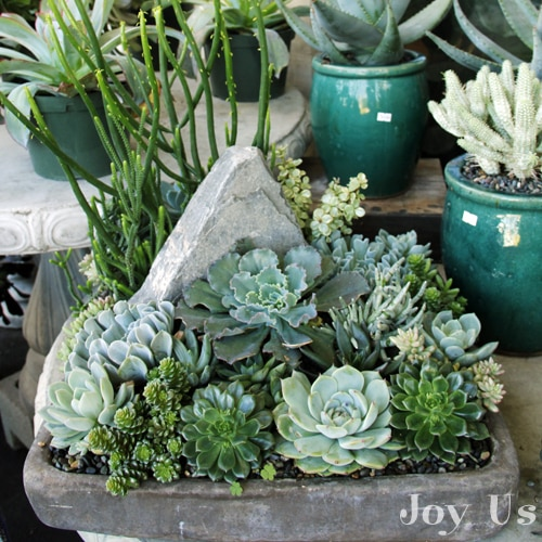 Roger S Gardens: Succulent Gardens And Plantings